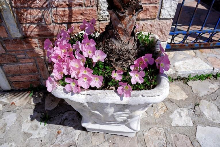 Wiosna w Himarze