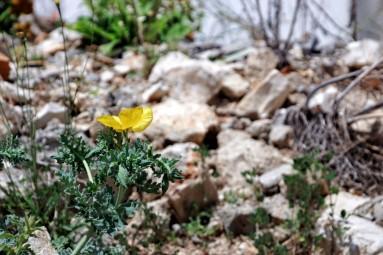 Himara wiosną