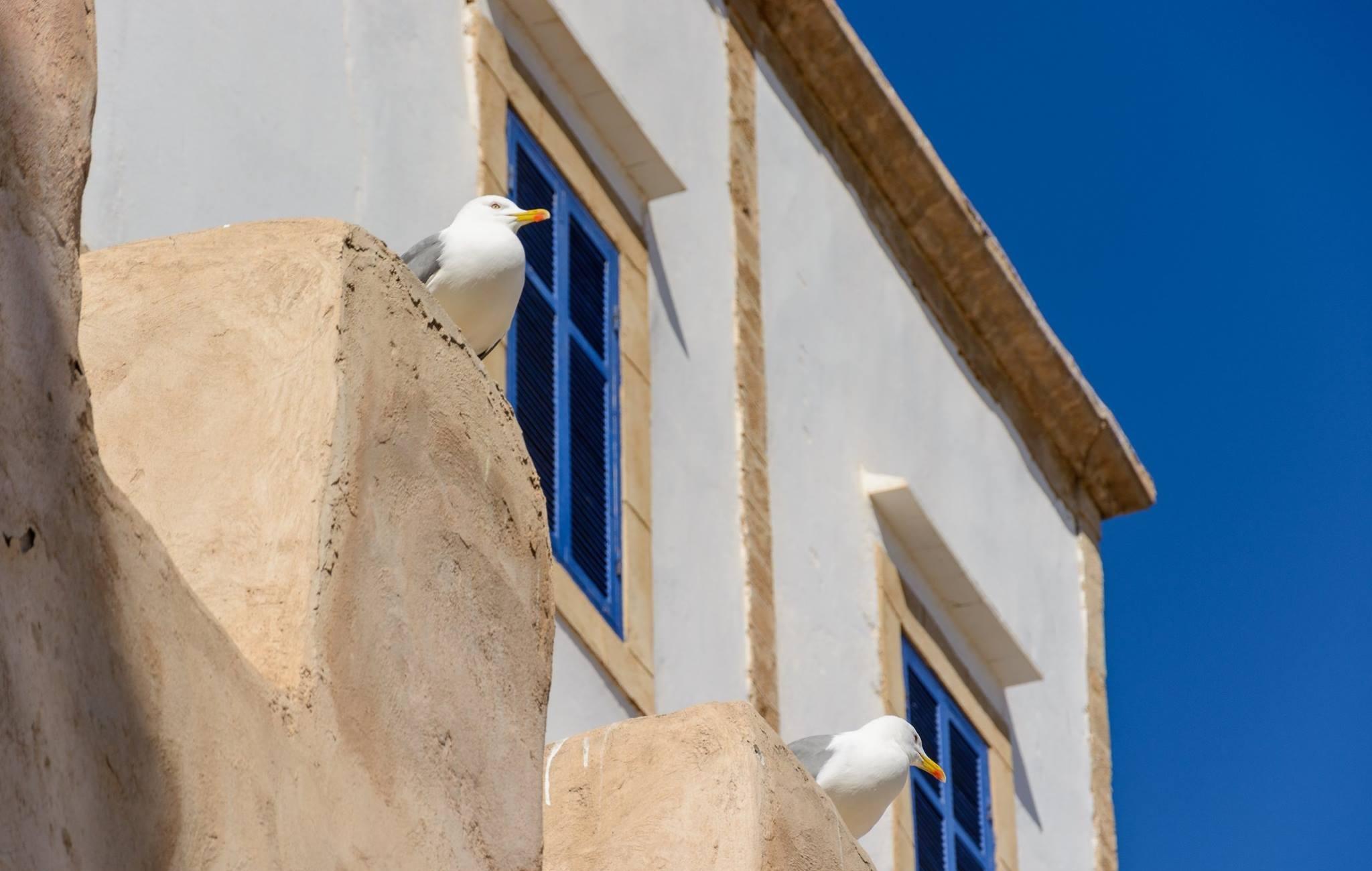 Essaouira letniego a raczej zimowego popołudnia